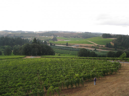Vineyards in the Willamette Valley