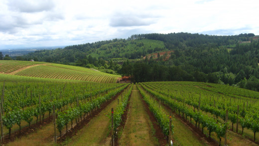 Some of the bounty you might enjoy from the Willamette Valley region.