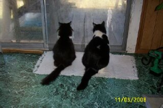 Freddie (on the right) looking out the glass sliding doors he used to pee on from the outside.