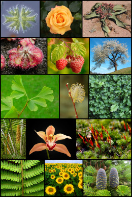 The almost infinite diversity of plant life forms.