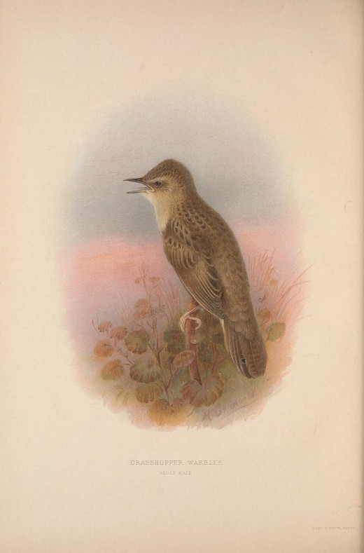 British Warblers H.E. Howard published 1907-1914