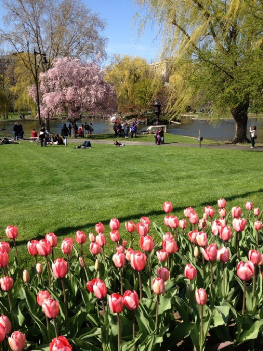 Boston Public Garden abounds with color in the spring, summer, and fall.