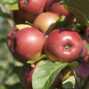 Celebrate National Apple Month This Fall