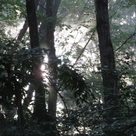 Early morning in the forest.