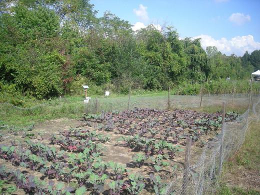 D-Town Urban Farm