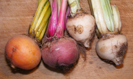 Colored beet roots.