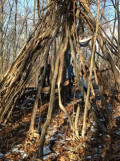 Get Outside and Build a Simple Fort with Kids