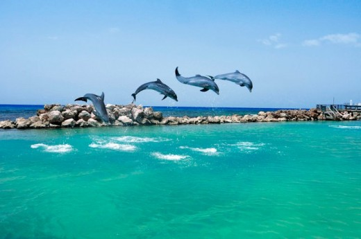 The Dolphin Cove, Ocho Rios