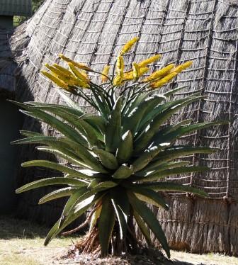 Recreation of traditional hut at Mlilwane Wildlife Sanctuary