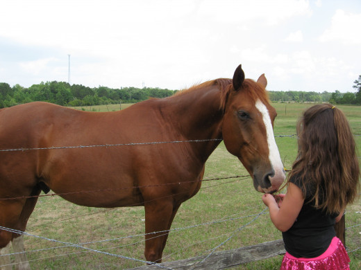 My horse-crazy granddaughter, Lexi.