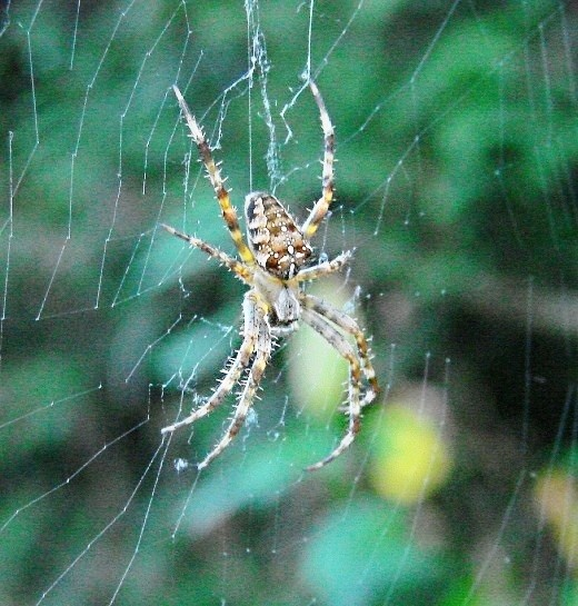 Amazing spiders strange interesting and scary facts