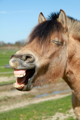 Donkey jokes appeal to the eighth grader in all of us.  Laughter is the best medicine.