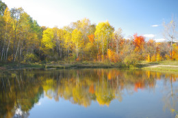 Fall colours at Mono Conservation Park. This picture won me the Bruce Trail Best Picture Award.