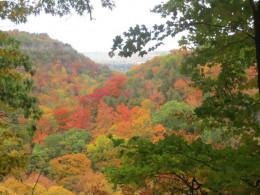 Fall colours on the ridge at Bruce Trail near Hamilton