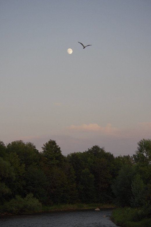 This can only be waxing phase of the moon just before sunset. It will turn into full moon in next couple of days.