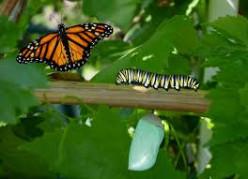 An Elusive Butterfly