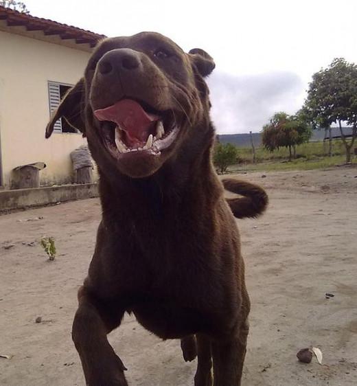 Panting dog.