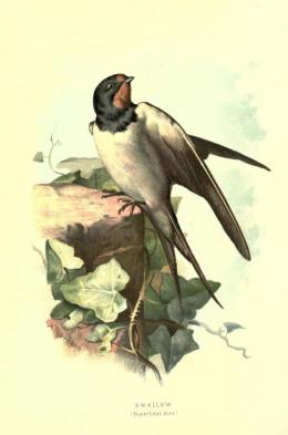 Familiar Wild birds {1883}