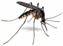WAYS to cope with dengue FEVER
