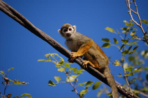 Monkeys love having fun and playing tricks.