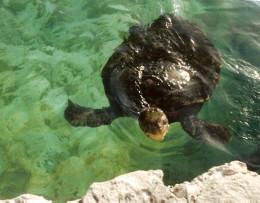Meet the natives.  (Bahamas).