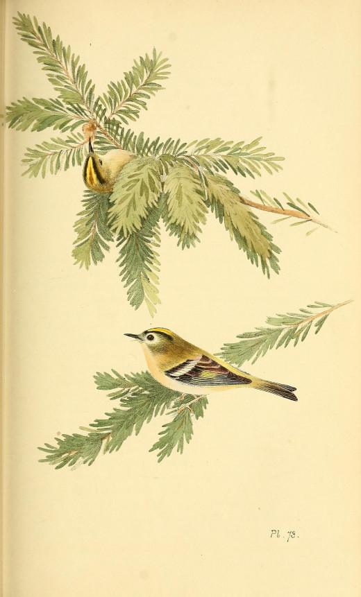 Meyer Published  1842 -1850