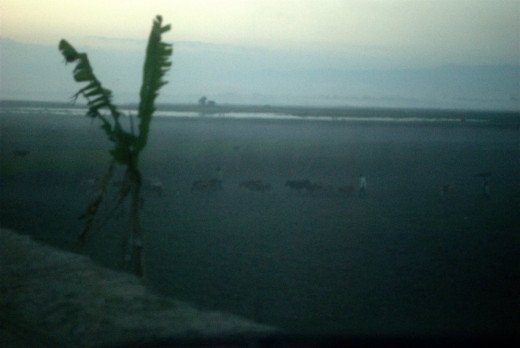 Misty evenings during winters in Majuli