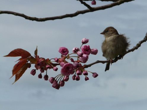 His Eye Is On A Sparrow, a small but important part of all life. Even more important are our autistic children.