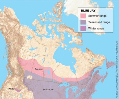 Range Map of Blue Jays