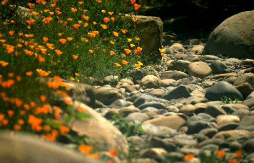 Flowers Along A Creek