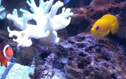 Nemo and my Lemonpeel Angel