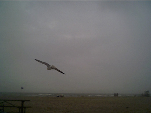 Bird Over the Beach