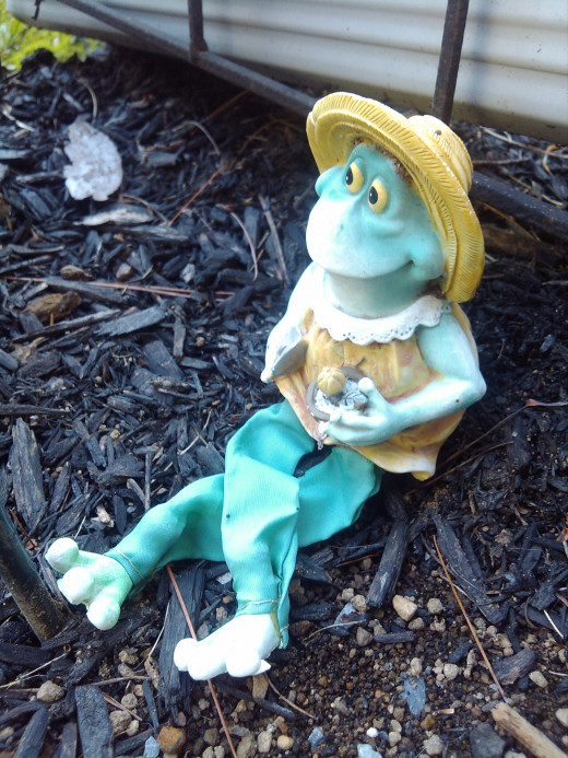 Francine the frog knows better then to go jumping into holes!