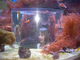 In the tank with the fishes at Sea World, FL