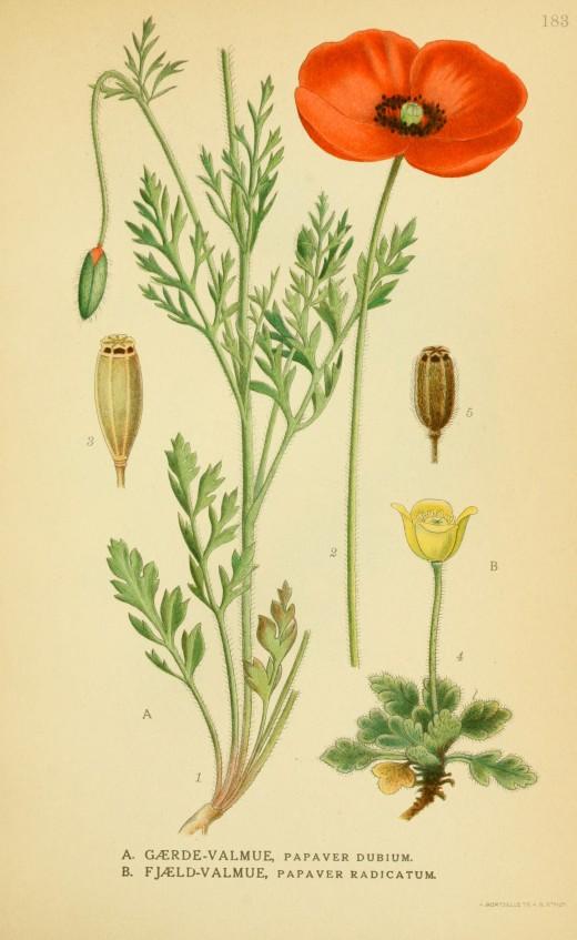 Billderafnordens flora