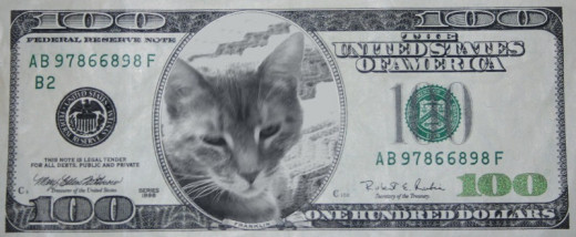 Princess 100 dollar bill