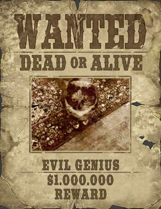 """At """"Ipccy"""" you can even put your cat on a Wanted Poster!"""
