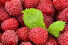 Both raspberry fruit and leaves have medicinal properties