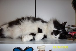 One of his favorite spots to sleep (atop the refrigerator)