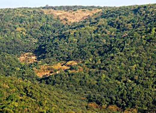 Deciduous Forest Landforms