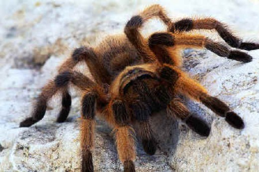 This is the biggest spider in the world!  Can you name it?