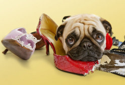 How to potty train your puppy in 5 days!