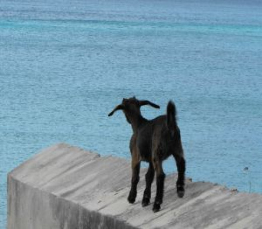 Capricorn is represented by the Sea Goat, which is said to be a combination of a mountain goat and dolphin. They are wise and far reaching, while also being extremely stubborn and short sighted.