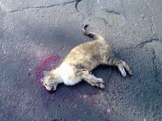 Does Anybody Care while running over an animal like this?
