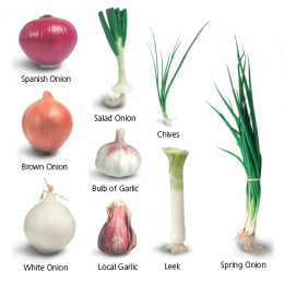 Onions and garlic as plant sources of DNA.