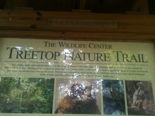 Treetop Nature Trail.  This area also houses the bird sanctuary. Hawks, Owls and even Vultures are located in this area of the park.
