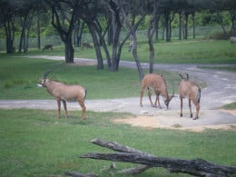 Even if your room doesn't have a view of a savannah you can relax at one of the many lookout points and view the animals there.