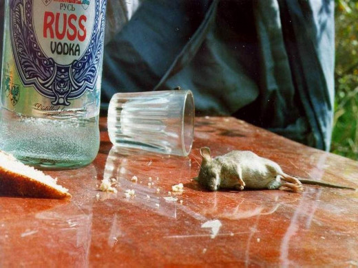 In Russia even the mice are alcoholics. The mouse is in stadium 7!