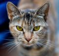 Interesting Cat Facts: How the CIA Tried to Weaponize a Feline