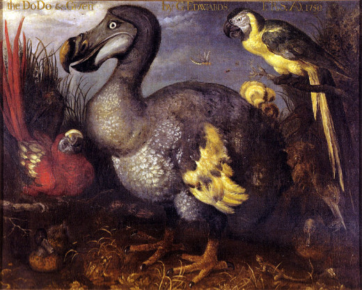 The dodo is undoubtedly the most famous animal to have become extinct at the hands of human beings.